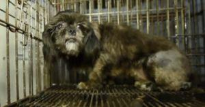 Colorado is Getting Closer to Being Free of Puppy Mills!