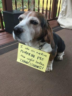 Thanks-for-giving me a Tummy Ache