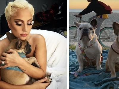 UPDATE: Lady Gaga's Dogs Return Home Safe And Sound