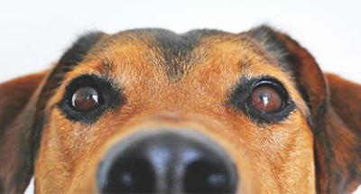 Top Veterinary Articles of the Week: The Importance of Symmetry, Tree Sap, and More on Lyme Disease