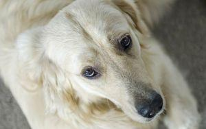 Noticing Your Senior Dog Is Experiencing More Skin Issues? This Can Help