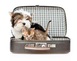 What You Must Do Before Traveling With a Pet