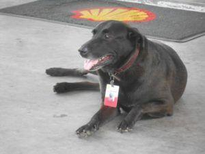 Abandoned Dog Gets A Job & A New Home At A Gas Station