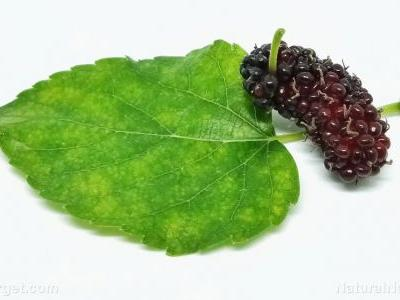 Study suggests using black mulberry to naturally treat acne