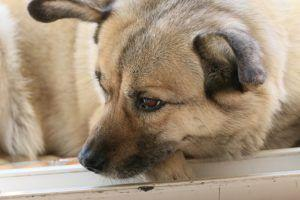 Is Your Dog's Anxiety Causing His Health Problems?