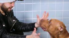 Shelter Dogs Have Sweetest Confused Reaction To Magician's Holiday Tricks