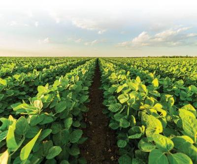 ISAAA 2018 Report Reveals Biotech Crops Continue to Provide Solutions to Hunger, Malnutrition, and Climate Change