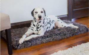 6 Ways An Orthopedic Bed Can Help Your Senior Dog