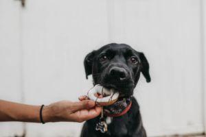 Introducing Your Dog To Guests: How To Keep Everyone Calm And Comfortable