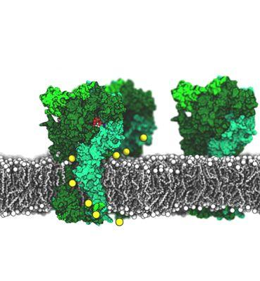 Novel Ion Channel Design Using Lipids