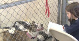 Young Girl Writes Stories To Read To Shelter Dogs