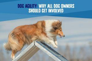 Dog Agility: Why ALL Dog Owners Should Get Involved
