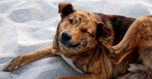 Studies Suggest That Probiotics May Help With Your Dog's Skin Itchiness & Allergies