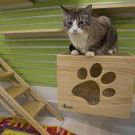 Mayor Murray officially opens the new Seattle Animal Shelter remodeled cat and critter areas