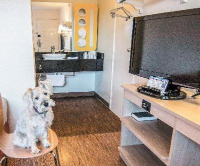 Dog-Friendly Hotels to Keep in Mind for Your Summer Vacation