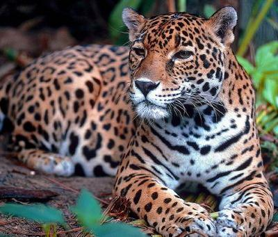 UPDATE: Fight the Border Wall's Threat to Animals