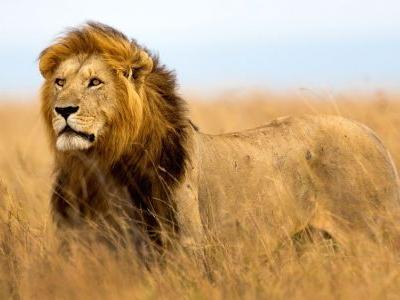 Feline fine: 5 of the world's best big cat destinations