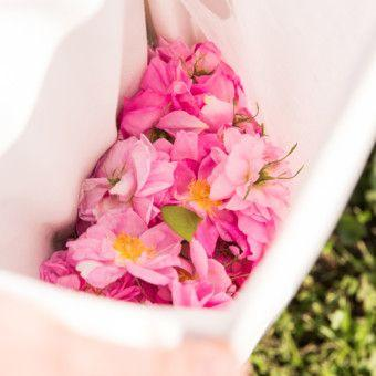 Would You Quit Your Job to Farm Roses for Dior Perfumes?