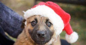 Santa's Elves Are Delivering Adopted Dogs On The Pawlar Express This Christmas And It's Something To Bark About!