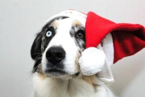 Getting A Puppy For Christmas: Problem Or Opportunity For Animal Shelters?