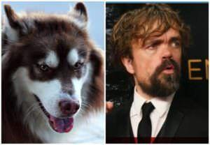 Game Of Thrones Star Peter Dinklage Urges Fans To Stop Buying Huskies As A Fad