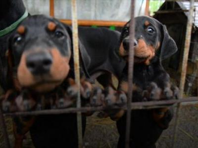 California Is Banning The Sale Of Non-Rescue Pets