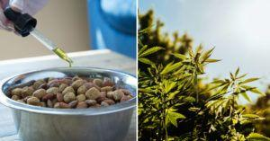 6 Reasons Why Everyone is Talking About CBD Hemp Oil for Dogs