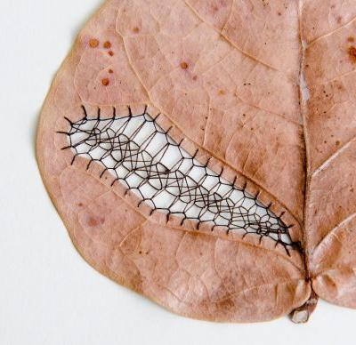 Carved and Embroidered Leaves by Hillary Fayle