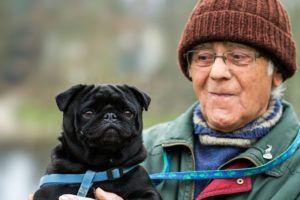 8 Dog Breeds Perfect For Seniors