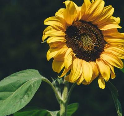 10 Plants And Flowers That Are Super Easy To Start From Seed