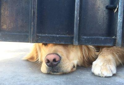 Every day Ralph the dog peeks out from under a gate to wait for his best friend to come home