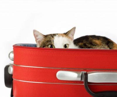 How to Help your Cat be a Better Traveler
