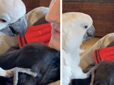 """Viral Parrot Says """"I Love You"""" To Her New Puppy Sibling"""
