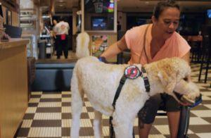 Ad Campaign Sheds Light On The Growing Problem Of Fake Service Dogs