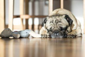 Top 5 Areas That Can Cause Dogs Pain