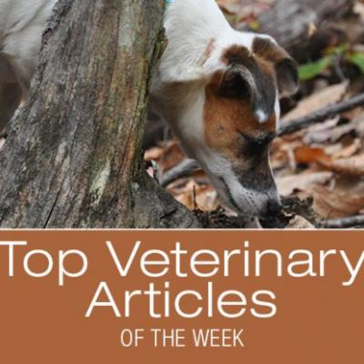 Top Veterinary Articles of the Week: Resistant Heartworms, Giardia, and more