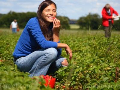 New study looks at how wildflowers can be used for crop development