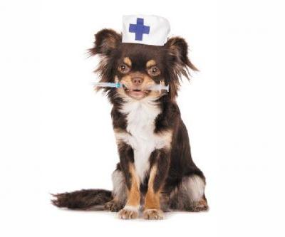 Affordable Pet Care: Where & How to Find Financial Assistance For Your Dog