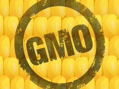 Beyond Labels: 10 Things You Should Know About GMOs