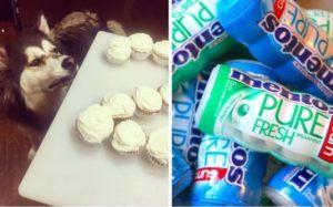 Grieving Family Warns The Public After Dog Dies From Eating Chewing Gum