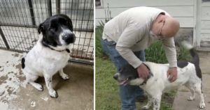 Shelter Dog Adopted After 900 Days By Brokenhearted Man