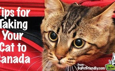 Tips for Taking Your Cat to Canada