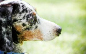 10 Things To Know About Adopting A Fearful Rescue Dog