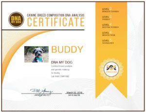 Buddy's DNA Results are In!