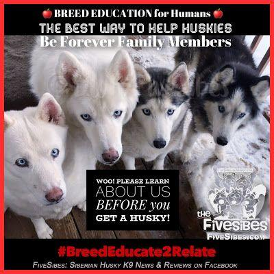 FiveSibes BreedEducate2Relate: It Takes A Village To Help Huskies in Need