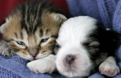 Puppy & kitten sales to be banned in British pet shops