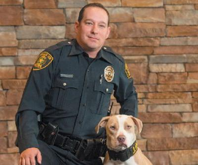 Shelter Dogs Transform Into Law-Enforcement Heroes With Universal K9