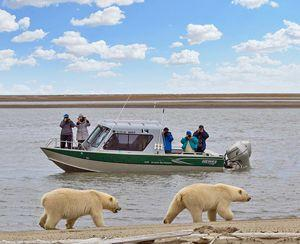 Natural Habitat Adventures Introduces New Polar Bear Photo Expedition to Alaska's High Arctic