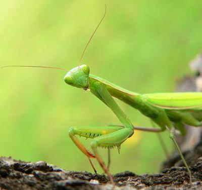 Bugs for green thumbs: 7 Beneficial bugs that you need in your garden