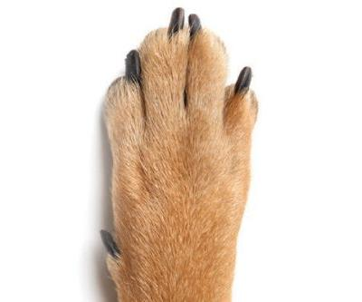 Frito Feet - Here's Why Your Dog's Paws Smell Like a Popular Corn Chip